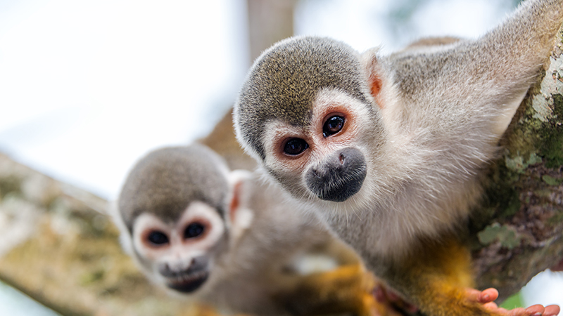 Monkeywebsite-size