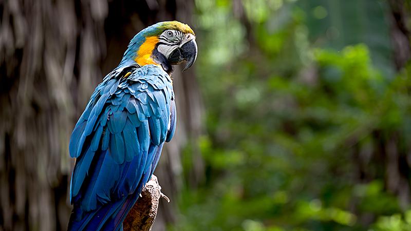 birdwebsite-size