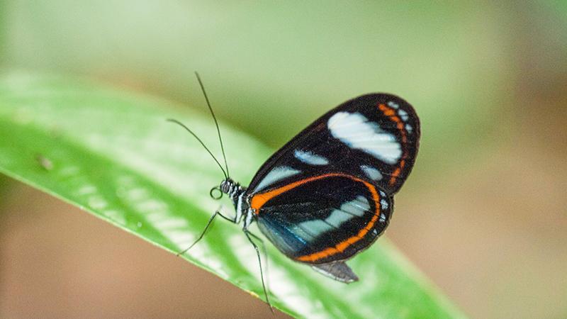 butterflywebsite-size