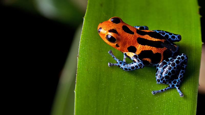 frogwebsite-size