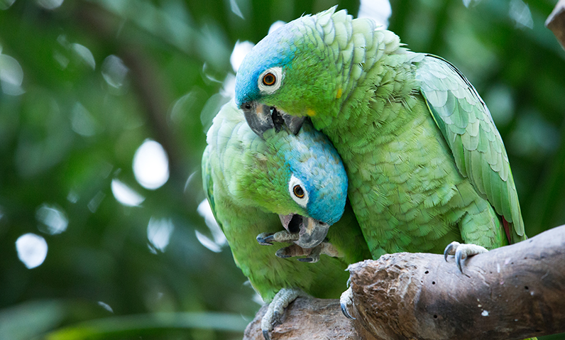 parrotswebsite-size