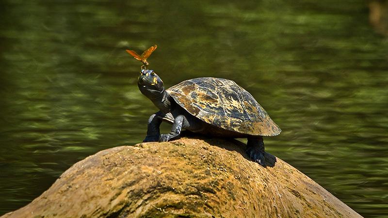turtlewebsite-size